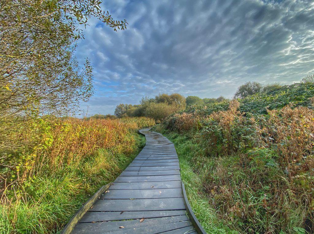 Walkway through a field