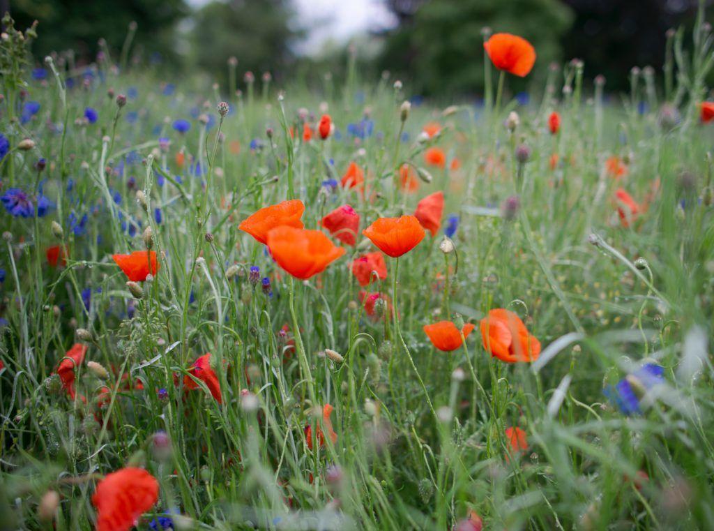 Image of wild flowers